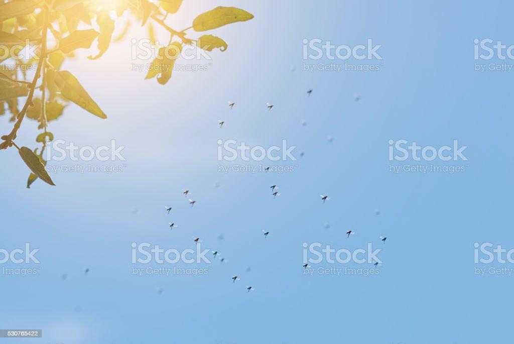 Danse homme moustiques dans la lumière sous les arbres - Photo