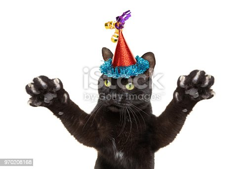 A black cat wearing a party hat and reaching his paws out dancing.