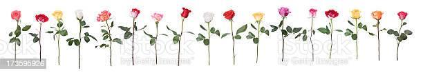 Dancing roses picture id173595926?b=1&k=6&m=173595926&s=612x612&h=vtjg54j6mj7bjte5f7ujbzwks4jcbz8gmr08v7ixwee=