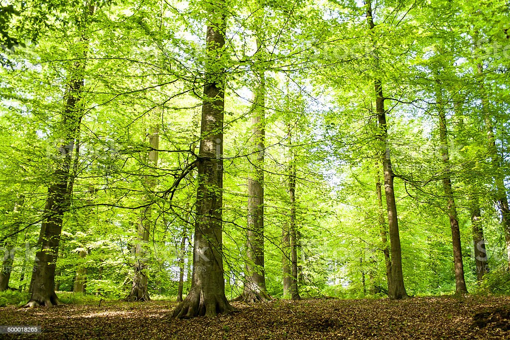 dancing trees in the green forest stock photo