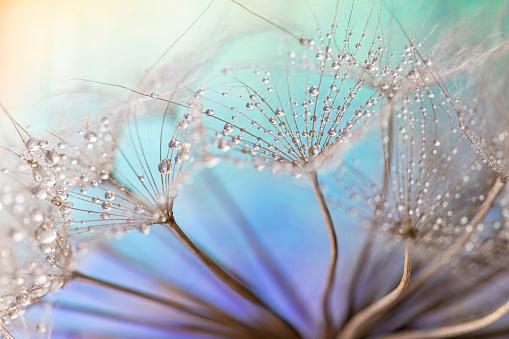 Dandelion and dew drops - Abstract Macro like alien landscape