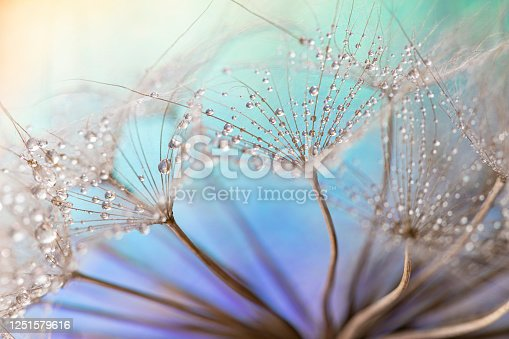 Dandelion and dew drops - Abstract Macro like alien landscape