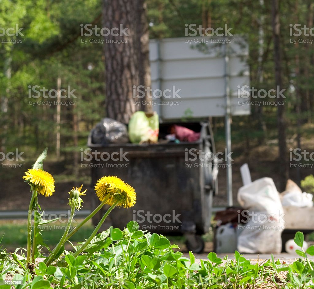Dandelion and garbage royalty-free stock photo