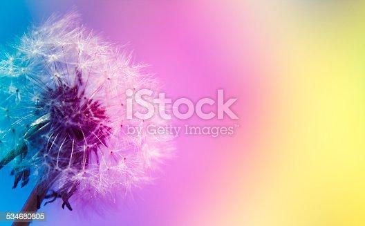 istock Dandelion and spectrum 534680805