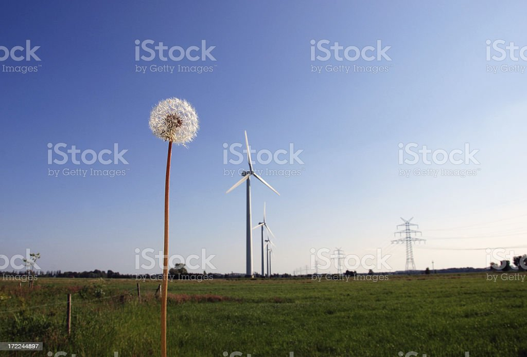 dandelion and windmills royalty-free stock photo