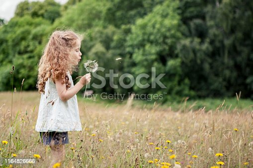A little girl is blowing a dandelion in a meadow