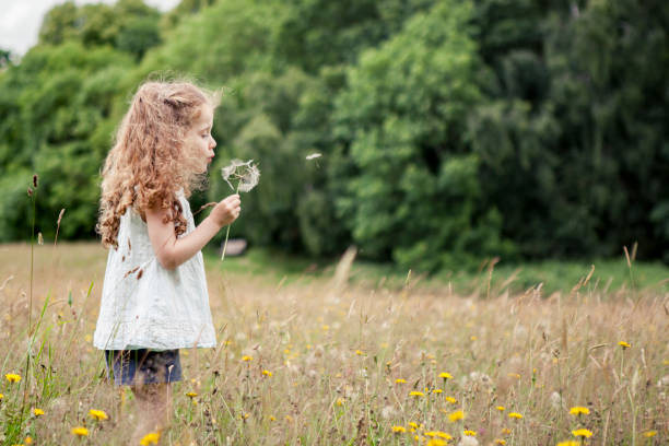 Dandelion Blow A little girl is blowing a dandelion in a meadow innocence stock pictures, royalty-free photos & images