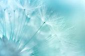 istock Dandelion Closeup 178620611