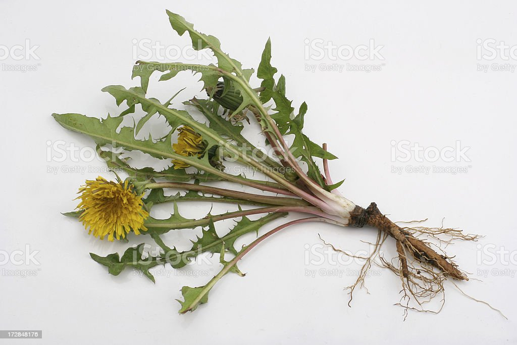 dandelion exposed royalty-free stock photo
