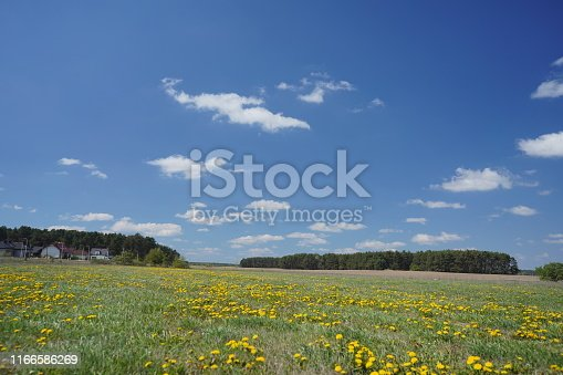 643781968 istock photo Dandelion field in the spring 1166586269