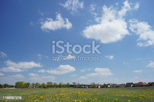 643781968 istock photo Dandelion field in the spring 1166587376