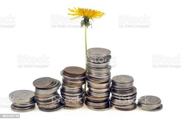 Kwiat Mniszka Lekarskiego Rosnący W Stosach Monet - zdjęcia stockowe i więcej obrazów Bez ludzi