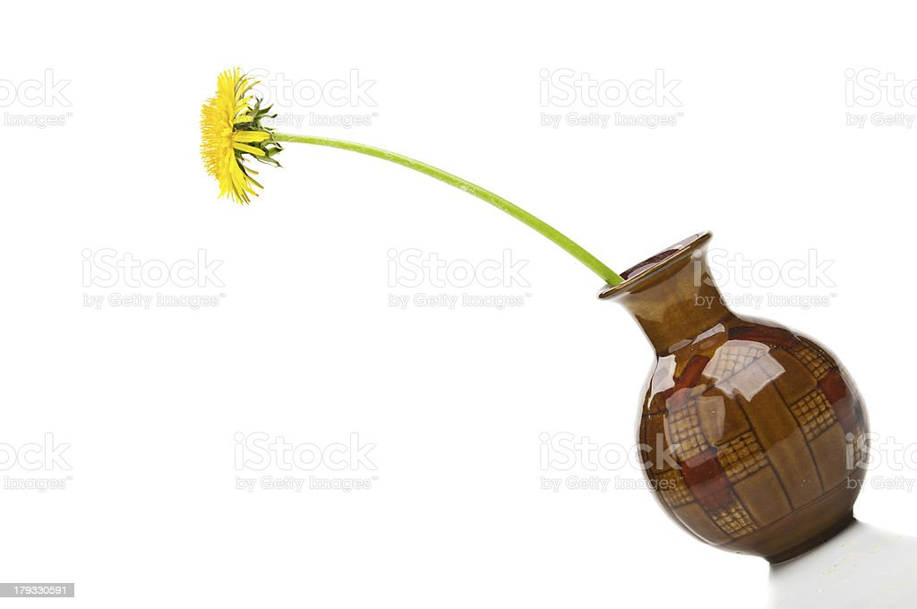 dandelion flower in vase royalty-free stock photo