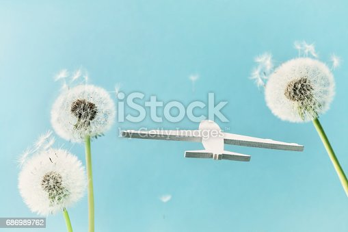 istock Dandelion flowers and flying airplane model in blue sky. Travel, summer vacation, aviation and air flight concept. 686989762