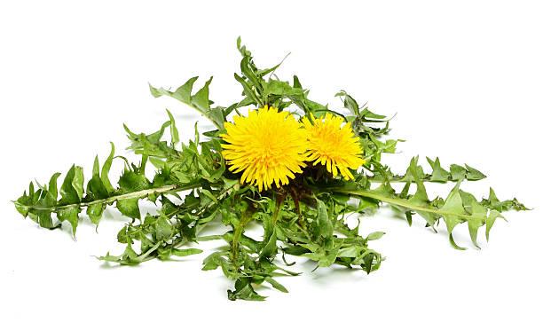 dandelion flowers with leaves. - 未開墾 個照片及圖片檔