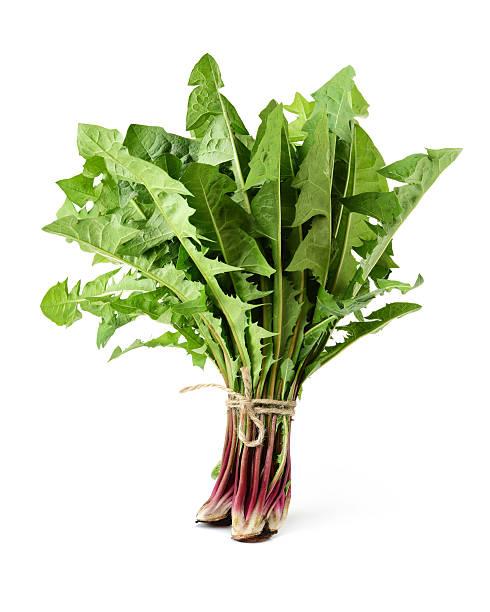 dandelion green leaf - löwenzahn korbblütler stock-fotos und bilder