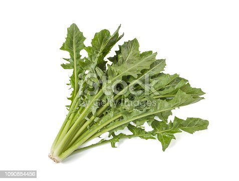 Dandelion greens isolated on white background