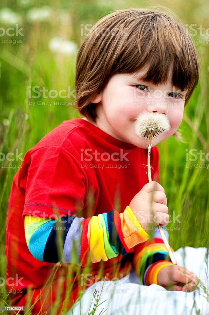 Dandelion Kisses royalty-free stock photo