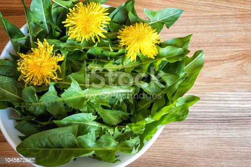 Dandelion leaves for salad pissenlit, natural fresh spring healthy food background