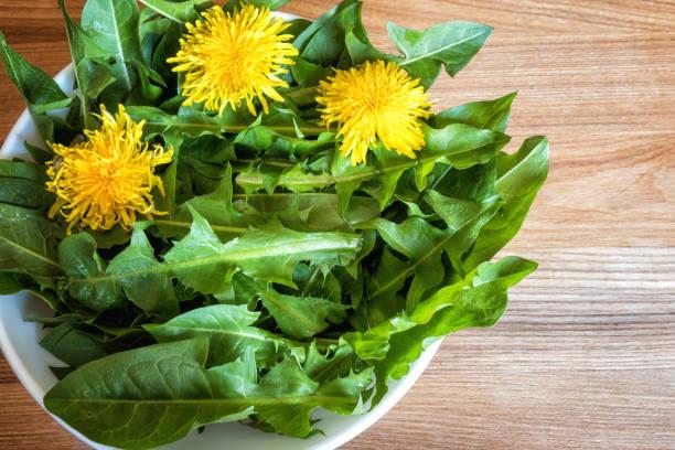 Löwenzahn Blätter für Salat Pissenlit, gesunde Ernährung Hintergrund – Foto
