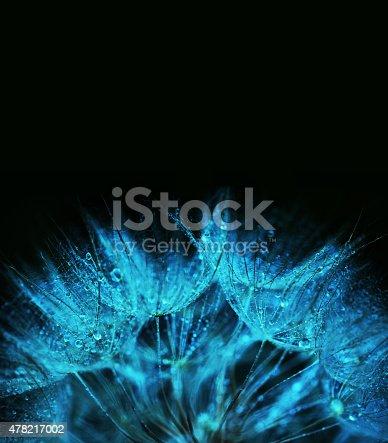 istock Dandelion macro abstract 478217002