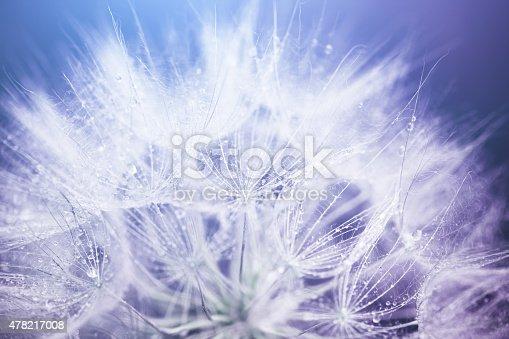 istock Dandelion macro abstract 478217008
