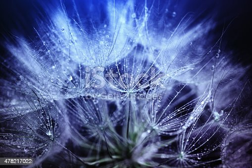 istock Dandelion macro abstract 478217022