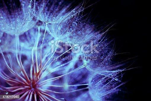 istock Dandelion macro abstract 478217040