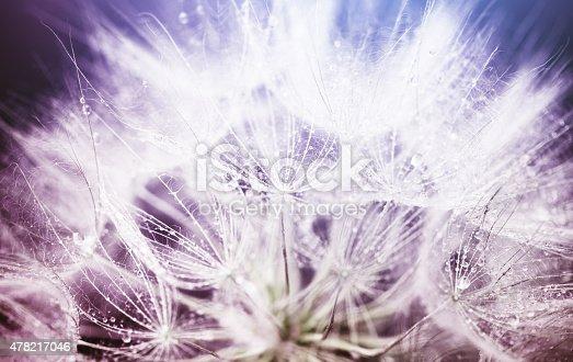 istock Dandelion macro abstract 478217046