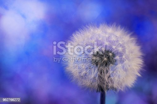 istock Dandelion on the blurry blue background 952766272