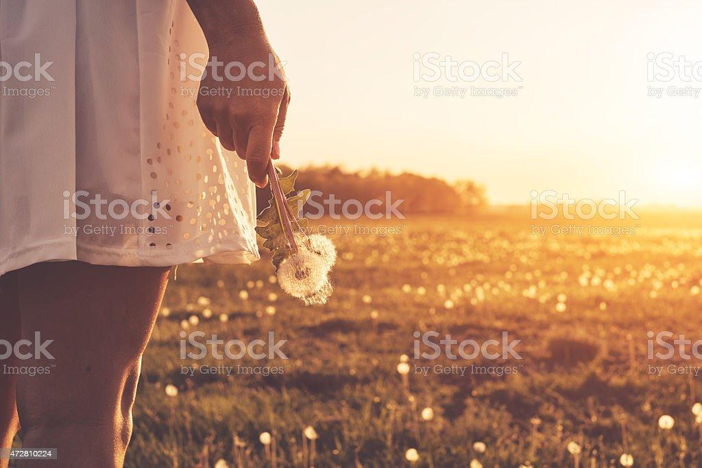 Löwenzahn auf Frau hand – Foto