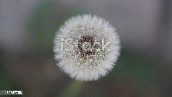 istock Dandelion 1132767758