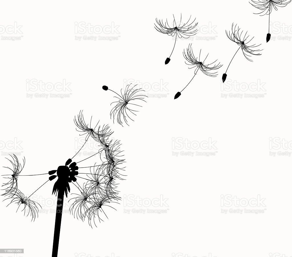 Fleur de pissenlit - Photo