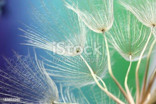 istock Dandelion 183854040