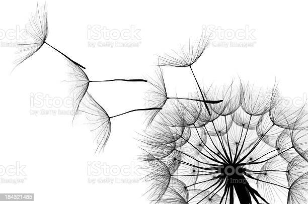 Free dandelion Images, Pictures, and Royalty-Free Stock