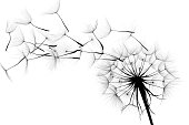 Free picture: cold, dandelion, flower, frost, frozen