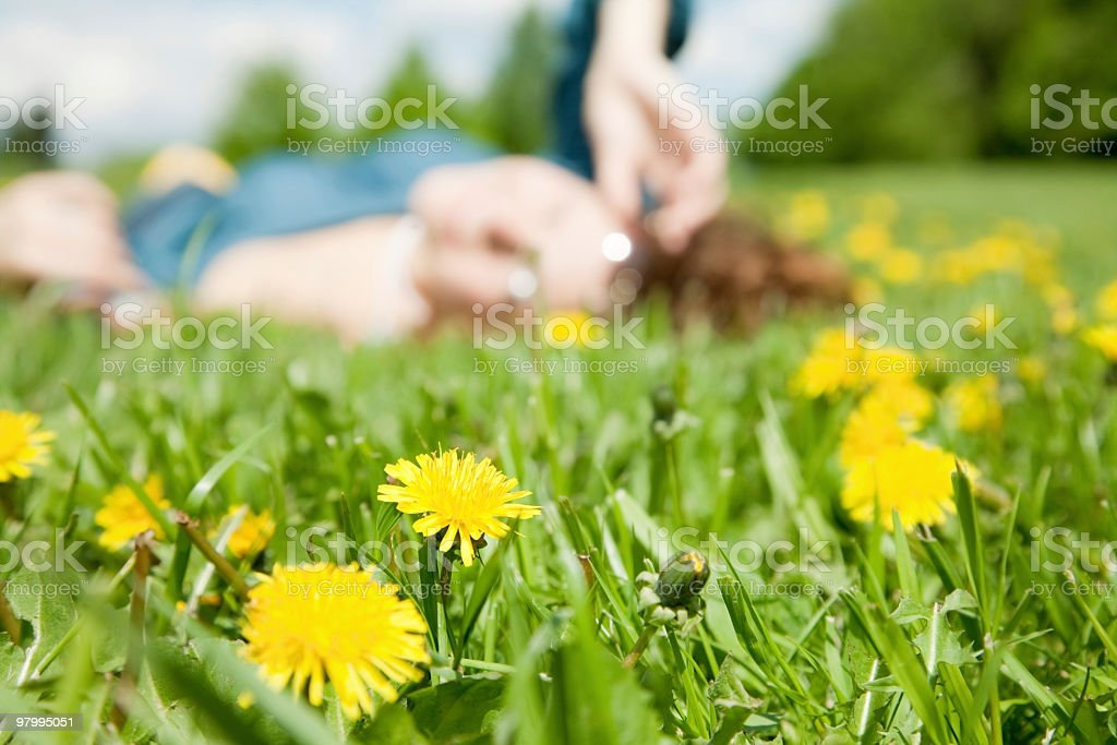 Dandelion royalty free stockfoto