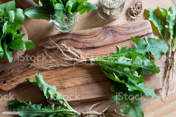 Dandelion Root With Leaves Stock Photo - Download Image Now