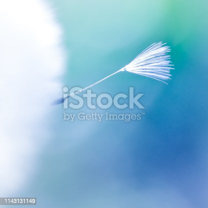 White gentle Dandelion seed flying a way on blue backround, travel concept. Air travel, leaving, new life, freedom concept.