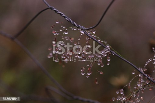 istock Dandelion seed in the wind 518625541
