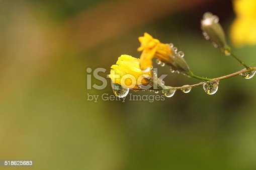 istock Dandelion seed in the wind 518625683