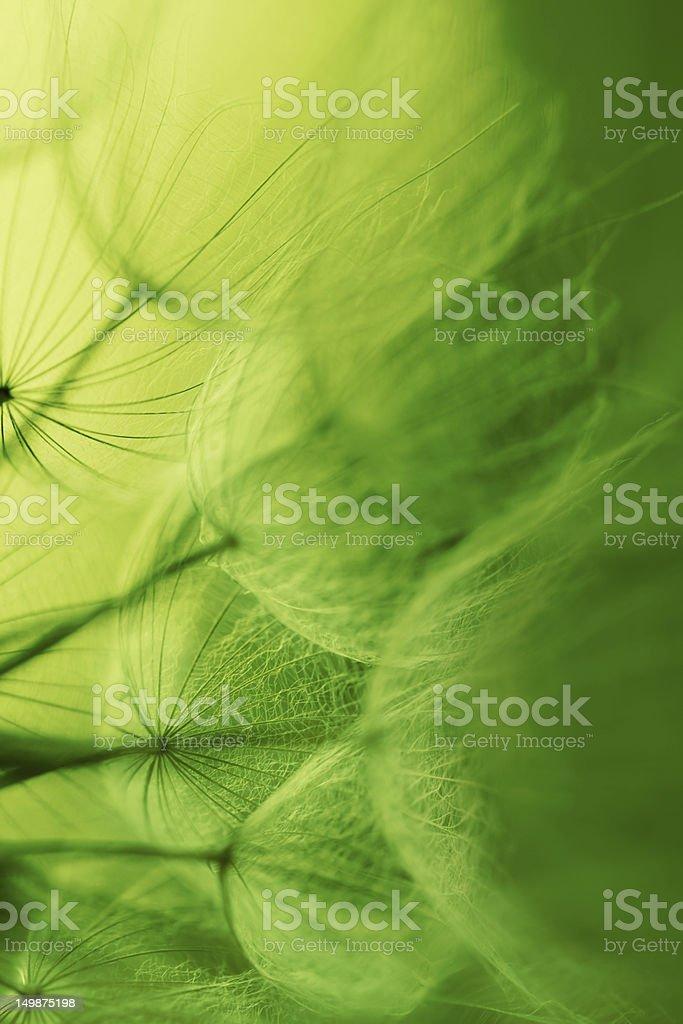 Dandelion seed royalty-free stock photo