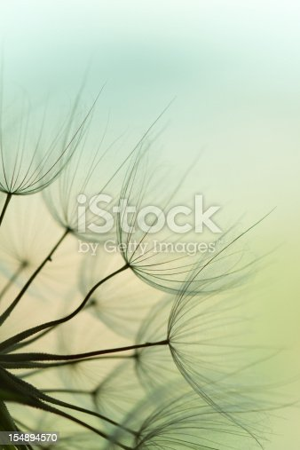 istock Dandelion seed 154894570