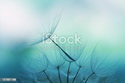 Dandelion seed, shallow focus