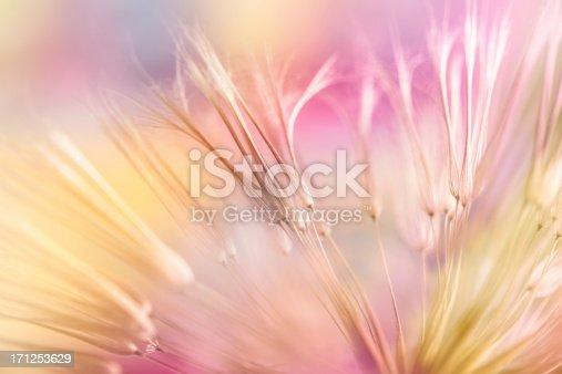 istock Dandelion seed 171253629
