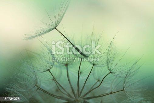 istock Dandelion seed 182734078