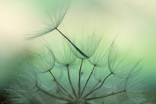 157681198 istock photo Dandelion seed 182734078
