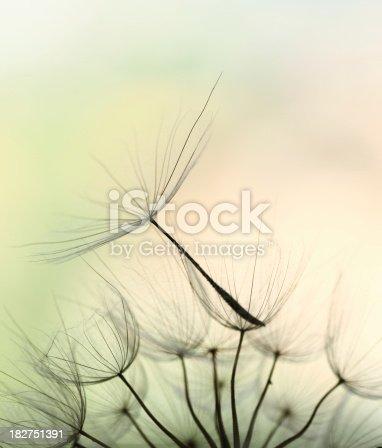 istock Dandelion seed 182751391
