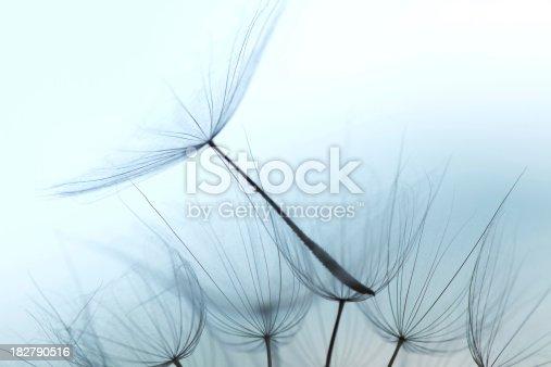 istock Dandelion seed 182790516