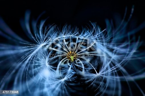 istock Dandelion seed 475173048